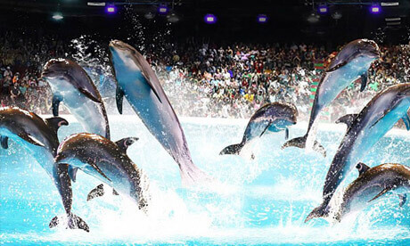dolphinarium ticket